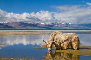 【チベット】ナム湖.jpg